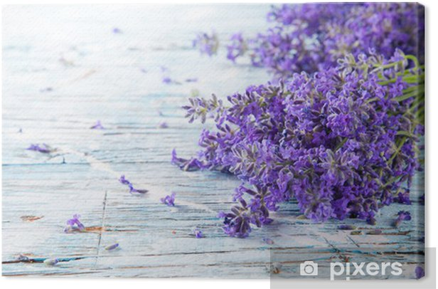 Fresh lavender on wood Canvas Print - Herbs