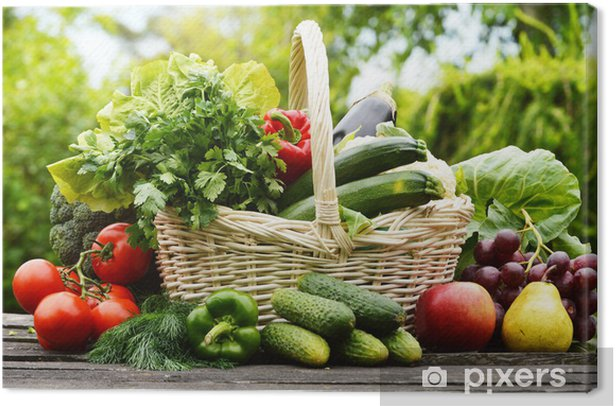 Fresh organic vegetables in wicker basket in the garden Canvas Print - Themes