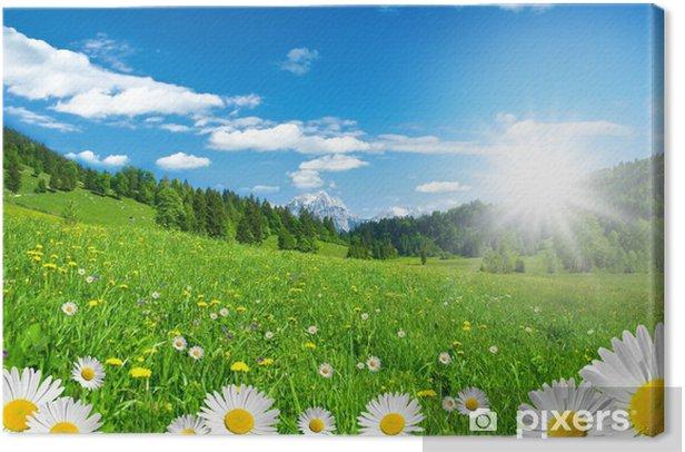 Frühling in den Alpen mit Margeriten und Blumenwiese Canvas Print - Themes