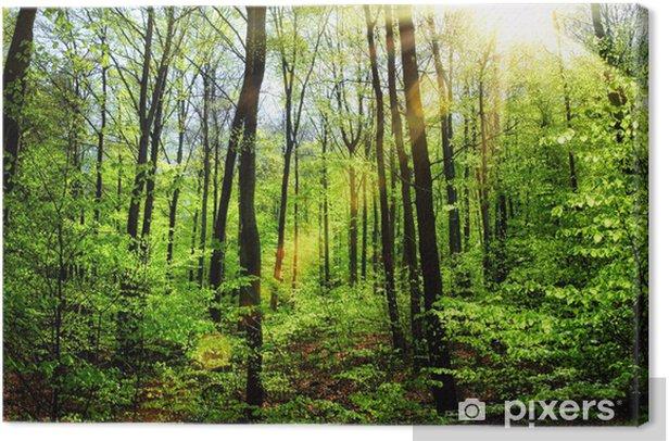 Frühlingssonne im Buchenwald Canvas Print - Destinations