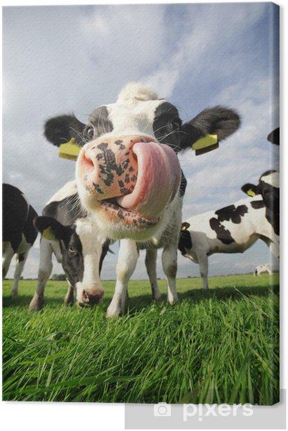 Funny cow Canvas Print - Mammals