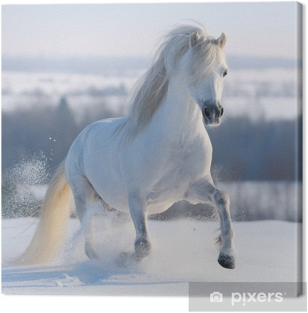 Galloping white horse Canvas Print - Themes