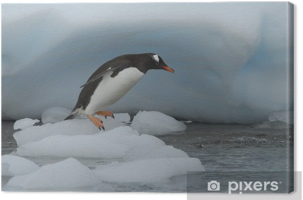 Gentoo Penguin Canvas Print - The North and South Poles