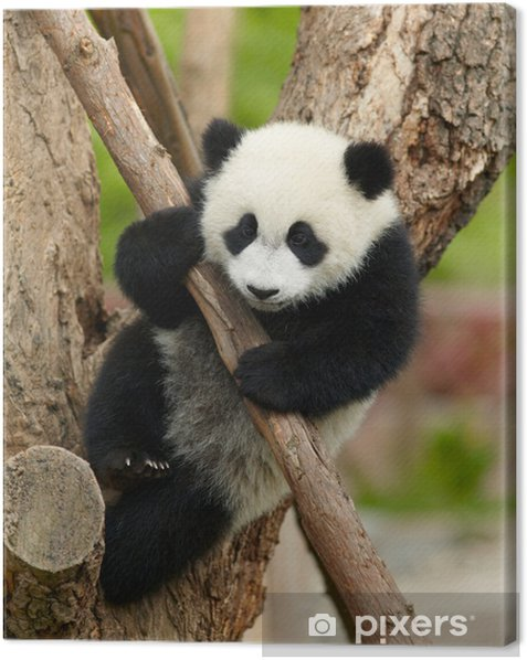 Giant panda baby over the tree Canvas Print - Themes