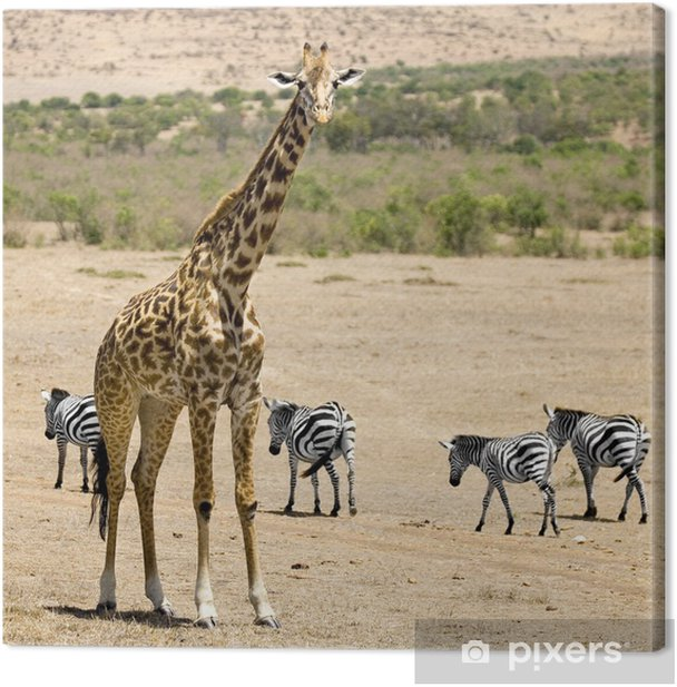 girafe masaï Canvas Print - Themes