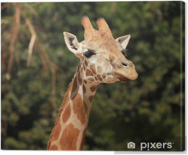 Giraffe Canvas Print - Themes