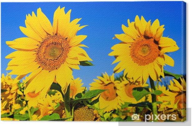 Girasole Canvas Print - Seeds