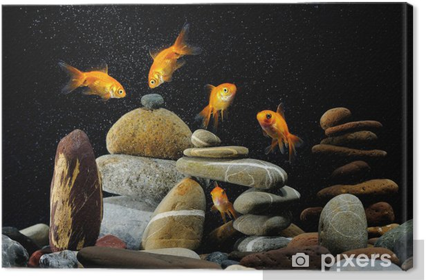 goldfish in aquarium zen stone and nice bubbles Canvas Print - Themes