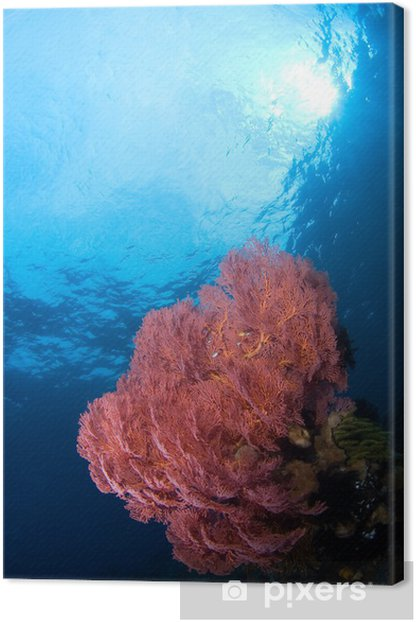 gorgonia coral indonesia sulawesi Canvas Print - Flowers