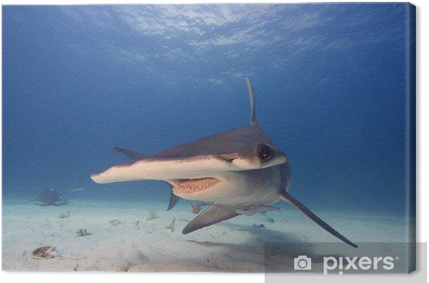 Great hammerhead Canvas Print - Sharks