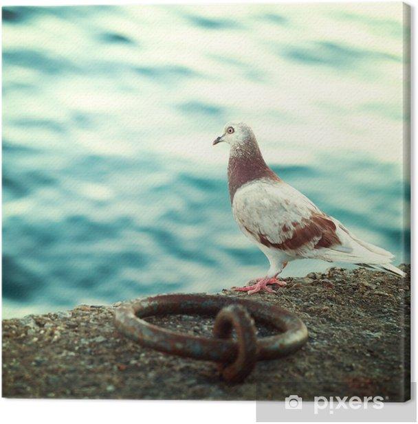 Greek dove on the promenade in Crete, impressions of Greece Canvas Print - Travel