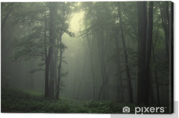 Green forest after rain Canvas Print - Styles
