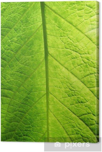 Green Leaf Texture Canvas Print - Seasons