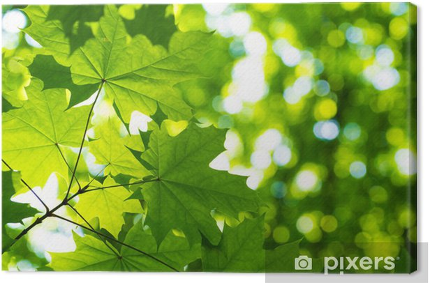 green leaves with sun Canvas Print - Themes