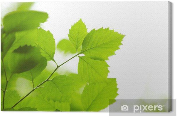 Green leaves Canvas Print - Plants