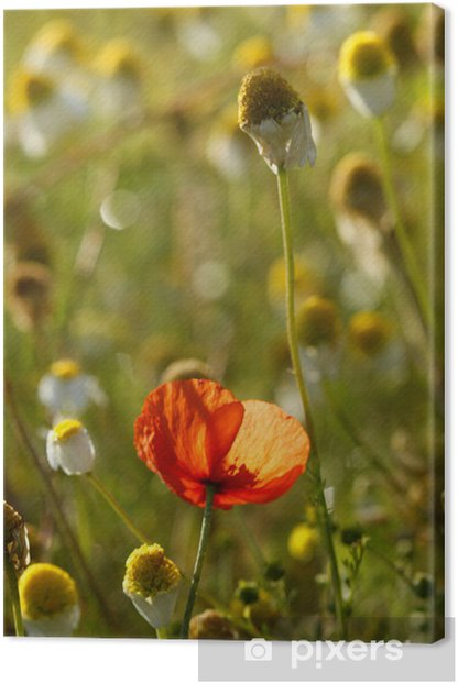 green poppie and cammomile fields Canvas Print - Seasons