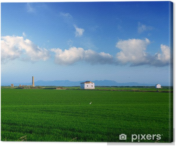 green rice fields in El Saler at Valencia Spain Canvas Print - Agriculture