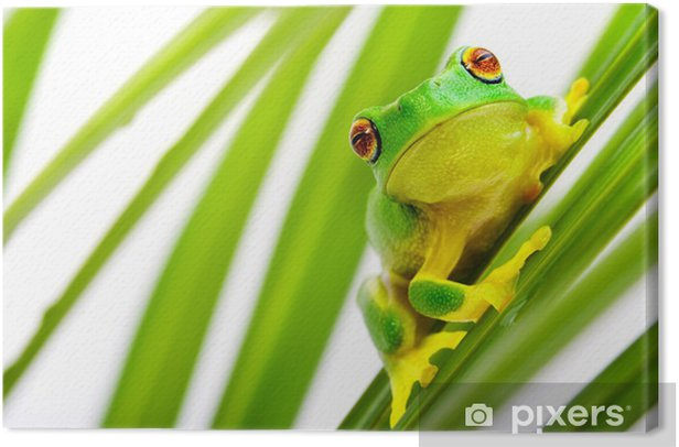 Green tree frog on palm tree Canvas Print - Frogs