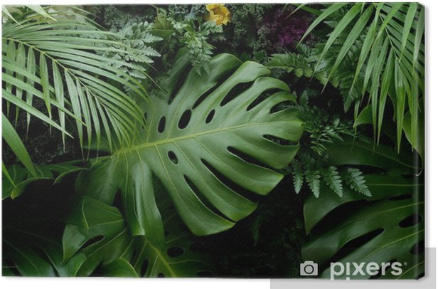 Green Tropical Leaves Monstera Palm Fern And Ornamental Plants Backdrop Background Canvas Print Pixers We Live To Change Steve's leaves currently has over 100 different & beautiful tropical plant varieties available. pixers