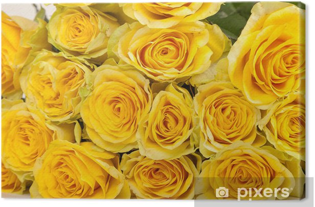 Group of fresh yellow roses Canvas Print - Flowers