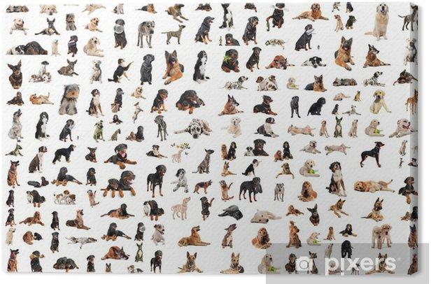 groupe de chiens de race Canvas Print - iStaging