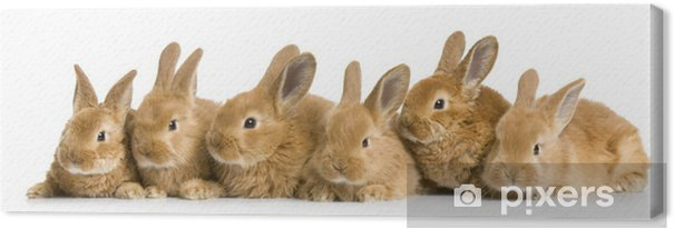 groupe de lapereaux Canvas Print - Rabbits