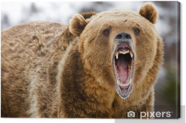 Growling Grizzly Bear Canvas Print - Themes