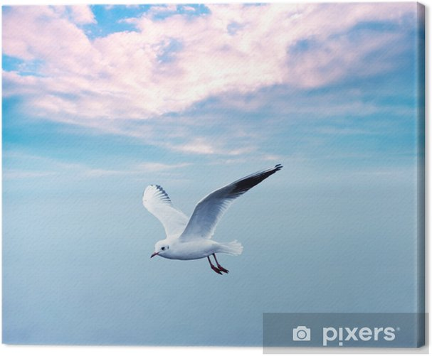 gull soaring against a clouds sky Canvas Print - Themes