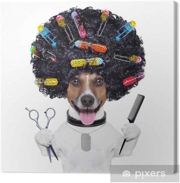hairdresser dog with curlers Canvas Print - Wall decals