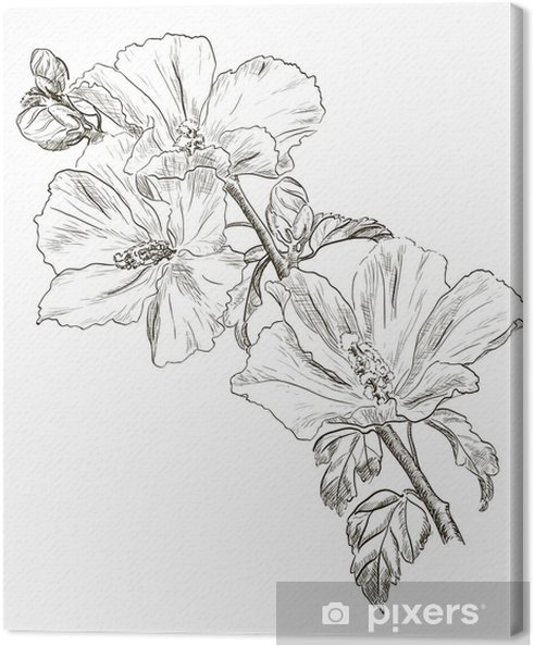 Hand Drawing Hibiscus Flower Canvas Print Pixers We Live To Change