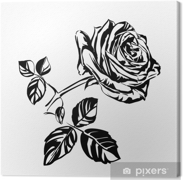 Hand Drawn Roses Canvas Print Pixers We Live To Change