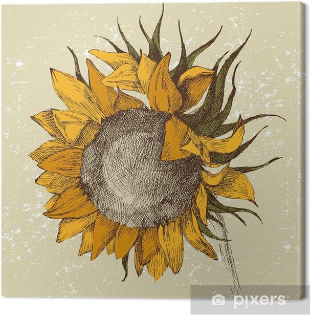 hand drawn sunflower Canvas Print - Themes
