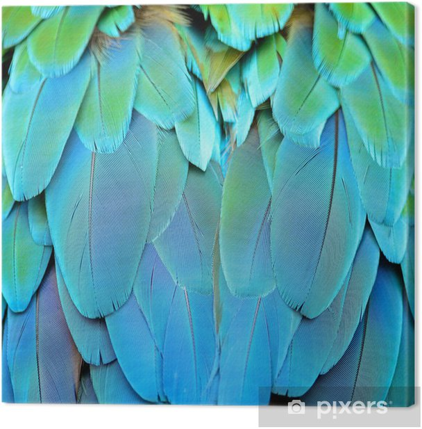 Harlequin Macaw feathers Canvas Print - Themes