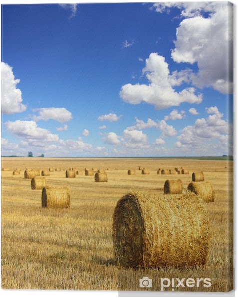 harvested bales of straw in field Canvas Print - Themes