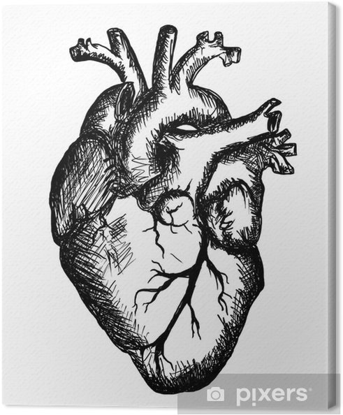 heart drawing on white background Canvas Print