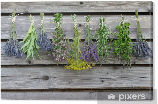 Herbs drying on the wooden barn in the garden Canvas Print - Herbs