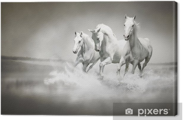 Herd of white horses running through water Canvas Print - iStaging