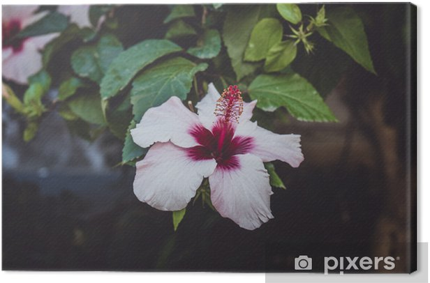 hibiscus flower Canvas Print - Plants and Flowers