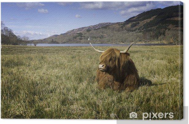Highland Cow Canvas Print - Criteo
