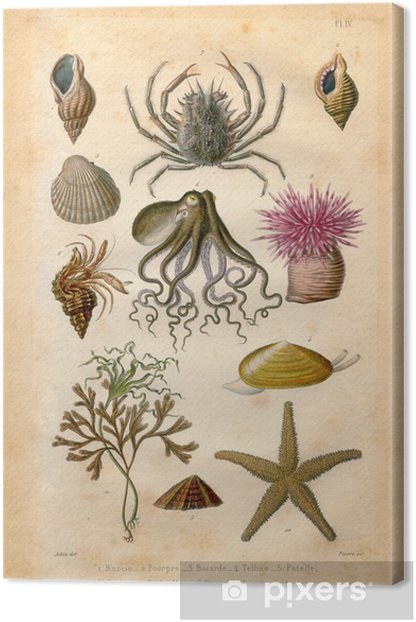 Histoire naturel : Fond Marin Canvas Print - Aquatic and Marine Life