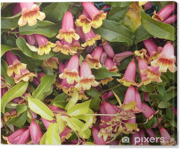 honeysuckle Canvas Print - Flowers