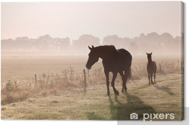 horse and foal silhouettes in fog Canvas Print - Themes