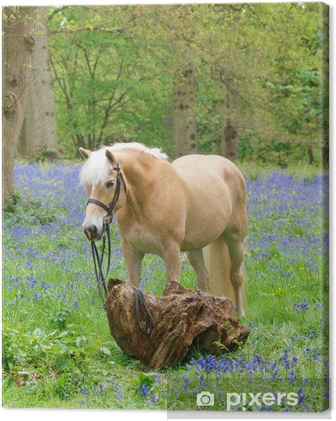 Horse In Bluebells Canvas Print - Mammals