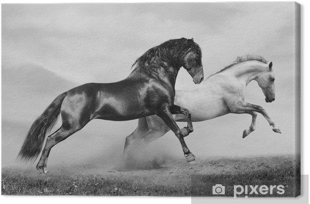 horses run Canvas Print -