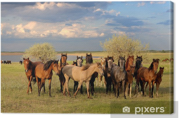 Horses Canvas Print - Themes