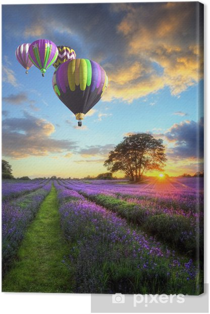 Hot air balloons flying over lavender landscape sunset Canvas Print -