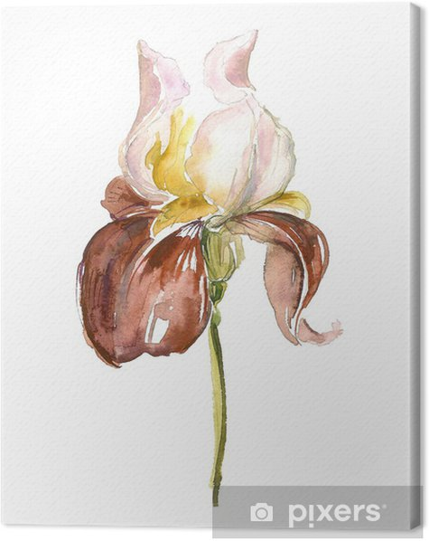 Iris Canvas Print - Art and Creation