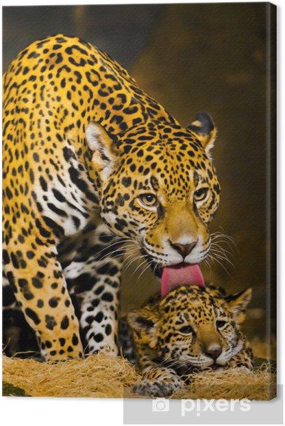 Jaguar Cubs Canvas Print - Themes