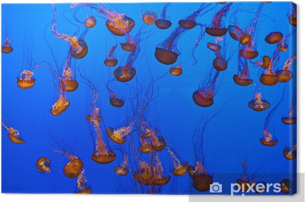 jelly fish in the blue ocean Canvas Print - Aquatic and Marine Life