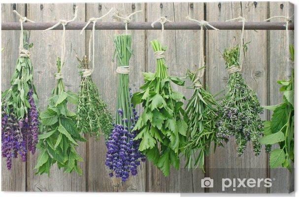 kräuter zum trocknen Canvas Print - Herbs